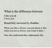 Life, Love, and Memes: What is the difference between  I like you &  I love you  Beautifully answered by Buddha:  When you like a flower, you just pluck it. But  when you love a flower, you water it daily..!  One who understand this, understands life... Well said. https://t.co/bgv724LzPK