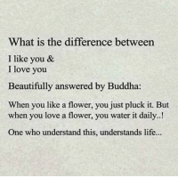 https://t.co/daiF6Ws6Gc: What is the difference between  I like you &  I love you  Beautifully answered  When you like a flower, you just pluck it. But  by Buddha:  when you love a flower, you water it daily..!  One who understand this, understands life... https://t.co/daiF6Ws6Gc