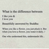 Life, Love, and Memes: What is the difference between  I like you &  I love you  Beautifully answered by Buddha:  When you like a flower, you just pluck it. But  when you love a flower, you water it daily..!  One who understand this, understands life... https://t.co/5hJblM51hF