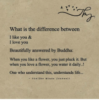 What is the difference between liking and loving for you?: What is the difference between  I like you &  I love you  Beautifully answered by Buddha  When you like a flower, you just pluck it. But  when you love a flower, you water it daily.  One who understand this, understands life  Via (The Mind s J o u r n a l) What is the difference between liking and loving for you?