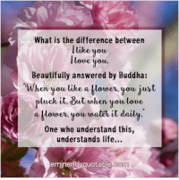 Pass it on... :): What is the difference between  I like you,  lowe you.  Beautifully answered by Buddha  When you like a blower, you just  pluck it. But when you love,  a klouner, you traten it daily  One who understand this  understands life...  eminently quotable co Pass it on... :)