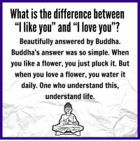 """you beauty: What is the difference between  like you"""" and """"llove you""""?  Beautifully answered by Buddha.  Buddha's answer was so simple. When  you like a flower, you just pluck it. But  when you love a flower, you water it  daily. One who understand this,  understand life."""