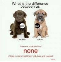 gigi the pit-bull advocate: What is the difference  between us  Evil  Pitbull  Labrador  The answer to that question is  none  if their owners treat them with love and respect gigi the pit-bull advocate