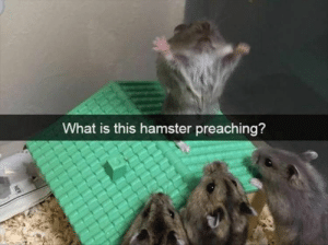 Funny Animal Pictures Of The Day 23 Pics: What is this hamster preaching?  NEW Funny Animal Pictures Of The Day 23 Pics