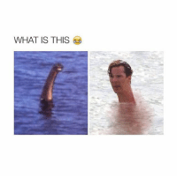 Loch Ness monster !: WHAT IS THIS Loch Ness monster !