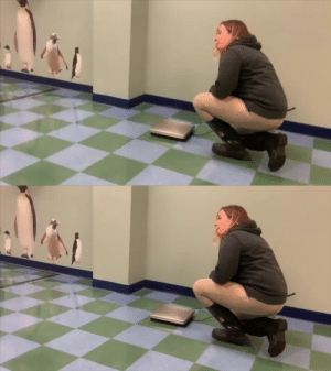 What it looks and sounds like when a penguin is getting weighed(Source): What it looks and sounds like when a penguin is getting weighed(Source)