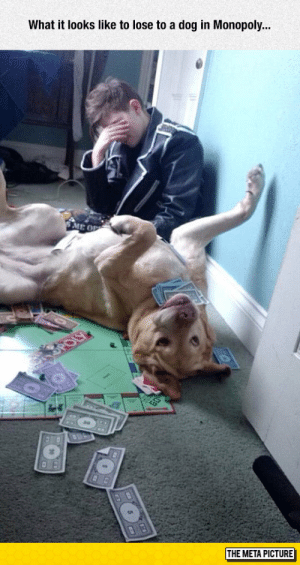 Monopoly, Tumblr, and Blog: What it looks like to lose to a dog in Monopoly...  ME OP  THE META PICTURE lolzandtrollz:  Losing In Monopoly