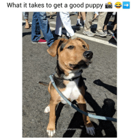 9gag, Animals, and Dogs: What it takes to get a good puppy ioi Keep swiping ➡️➡️➡️The evolution of the perfect puppy pic... How many shots does it take you? 😂❤️ Also this is what Scooby-Doo looked like as a puppy 😭😍 @funpawcare dogtraining puppylove doglover puppies puppy pupper puppers puppiesofinstagram dogstagram adopt rescue dogs dog love dogsofinstagram doggie doggies cbsla 9gag buzzfeed 9gag newpuppy newdog doglove doglovers furbaby venice venicebeach la cali @9gag @barked @buzzfeed @buzzfeedanimals @ladbible @unilad @theellenshow @barstoolsports @cbsla @lnsta_dogs @dogsofinstagram @instagram @dogsbeingbasic @dogs @failsclip @funnyfailvideos @fun_bestvids @lol_vines @bestvidsnow @failsvids @animals.co @thedodo @boopmynose @dogsofinstaworld @pups @pawz @puppystagrams @animal_unity @dogs.lovers @animalove.co @cutepetclub @puppyscene @campingwithdogs @bestvinesnow