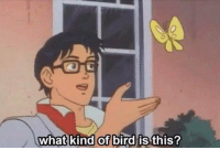 when your internet goes out and you are forced to get to know your surroundings: What kind of bird is this? when your internet goes out and you are forced to get to know your surroundings