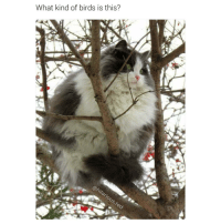 It's a catbird (@hilarious.ted): What kind of birds is this? It's a catbird (@hilarious.ted)