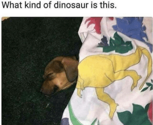 Dinosaur, What, and This: What kind of dinosaur is this.