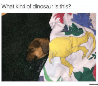 It's a T-Ruff.: What kind of dinosaur is this?  memes.coma It's a T-Ruff.
