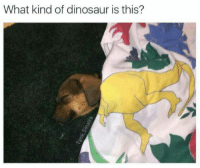 -------------------------- memes dank topkek kek kidzbop senpai emo dankmemes meme pogo hyphy lmao lit litaf harambe reddit edgy doggo vaporwave vape anime olivegarden diy aesthetic bleach lol relatable rip: What kind of dinosaur is this? -------------------------- memes dank topkek kek kidzbop senpai emo dankmemes meme pogo hyphy lmao lit litaf harambe reddit edgy doggo vaporwave vape anime olivegarden diy aesthetic bleach lol relatable rip