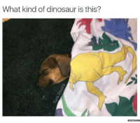 Here's your daily dose of cuteness to start this week off.: What kind of dinosaur is this?  memes  OME Here's your daily dose of cuteness to start this week off.