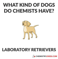 :P: WHAT KIND OF DOGS  DO CHEMISTS HAVE?  LABORATORY RETRIEVERS  CHEMISTRY JOKES COM :P