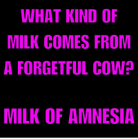 I hate cow puns. Does that make me lactose intolerant?: WHAT KIND OF  MILK COMES FROM  A FORGETFUL COWp  MILK OF AMNESIA I hate cow puns. Does that make me lactose intolerant?