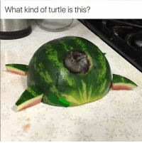 Food, Funny, and Memes: What kind of turtle is this? 50 Funny Food Memes That'll Keep You Laughing For Hours