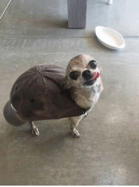 What kind of turtle is this