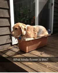 Certified florist help required. | For more @aranjevi: What kinda flower is this? Certified florist help required. | For more @aranjevi