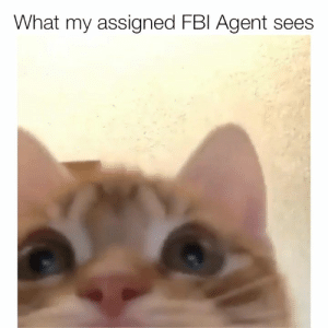Cats, Instagram, and Memes: What my assigned FBl Agent sees It's all cats, all the time - 🎥: @bleeply & @kohichapps, Instagram