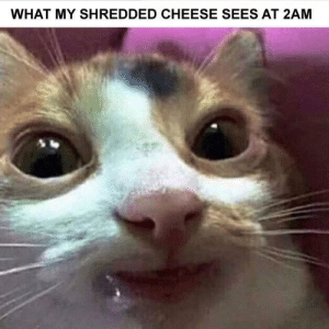 me_irl: WHAT MY SHREDDED CHEESE SEES AT 2AM me_irl