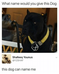 Dank, Funny, and Dog: What name would you give this Dog  B@DANK MEMEOLOGY  Shafeeq Younus  @Y2SHAF  this dog can name me 😂😂😂