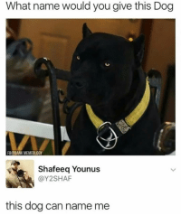 Dank, Memes, and 🤖: What name would you give this Dog  B@DANK MEMEOLOGY  Shafeeq Younus  @Y2SHAF  this dog can name me If you're not following @memezar you are seriously missing out 😂