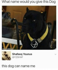 Memes, Best, and Today: What name would you give this Dog  BODANK MEMEOLOGY  Shafeeq Younus  @Y2SHAF  this dog can name me 30 Of Today's Best Pics And Memes