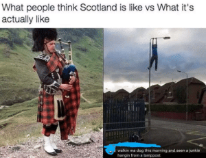 Scotland, Dog, and Mø: What people think Scotland is like vs What it's  actually like  walkin ma dog this morning and seen a junkie  hangin from a lamppost