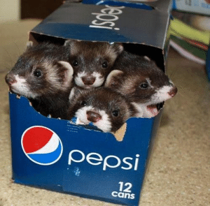 what r these?? rare bepis puppers???: what r these?? rare bepis puppers???