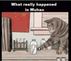 What really happened in Wuhan: What really happened in Wuhan