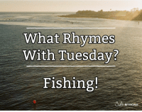What rhymes with Tuesday... fishing. #fishing #meme: What Rhymes  With Tuesday?  Fishing  AL STRONG What rhymes with Tuesday... fishing. #fishing #meme