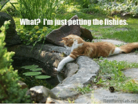 fishi: What rmiusmetting the fishies.  Captions By:  ILove Funny Cats me