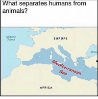 Africa, Animals, and Memes: What separates humans from  animals?  EUROPE  Atlantic  Ocean  a0  Mediterran  Sea  ean  AFRICA