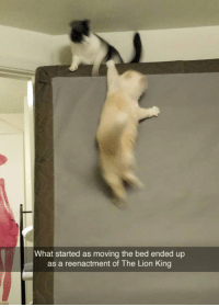 <p>Lion King Reenactment.</p>: What started as moving the bed ended up  as a reenactment of The Lion King <p>Lion King Reenactment.</p>