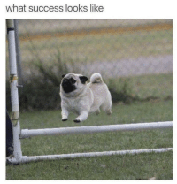 Memes, Success, and 🤖: what success looks like https://t.co/NL9mMTIrds