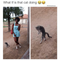 Cats, Memes, and Pull Out: What tf is that cat doing  @Drsmashlove How I stroll out of a girl's room when she ask if I pulled out and I say yes but in reality I left a gigantic deposit TimeToChangeMyPhoneNumber AndAddress AndIdentity MyAbsenceWillBuildHisCharacter SeeYouOnDraftDayLilMan 😍😂😂😂