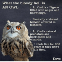 owl: What the bloody hell is  AN OWL  . An Owl is a Pigeon  filled with anger and  knowledge.  e Basically a violent  balloon covered in  feathers.  . An Owl's natural  predators are  urricanes and  wizardds  Owls live for 300  .1 years if they don't  die first.  Dave