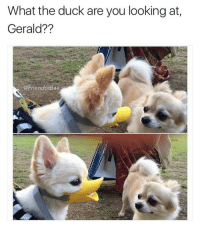 you better ducking check yourself before you ducking wreck yourself (@friendofbae 👈🔥🔥🔥): What the duck are you looking at  Gerald??  @Friend Bae you better ducking check yourself before you ducking wreck yourself (@friendofbae 👈🔥🔥🔥)
