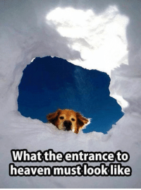Now you know ...🐾🐕: What the entrance to  heaven must look like Now you know ...🐾🐕