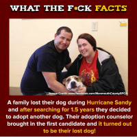 Facebook, Facts, and Family: WHAT THE F CK FACTS  FACTS  tmage Credit: www.facebook.com/MonmouthCountySPC  A family lost their dog during Hurricane Sandy  and after searching for 1.5 years they decided  to adopt another dog. Their adoption counselor  brought in the first candidate and it turned out  to be their lost dog! Weird But Sweet via /r/wholesomememes http://bit.ly/2SjLZBn