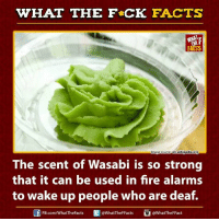 Strong: WHAT THE FCK FACTS  Image source en.wikipedia.org  The scent of Wasabi is so strong  that it can be used in fire alarms  to wake up people who are deaf.  Ed @WhatTheFFacts  FB.com/WhatThe Facts  @What TheF Fact