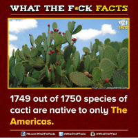 Cactie: WHAT THE FCK FACTS  Image source-  www.pinterest.com  1749 out of 1750 species of  cacti are native to only The  Americas.  FB.com/WhatThe Facts  @WhatTheFFacts  @What The FFact