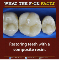 Teething: WHAT THE FCK FACTS  Restoring teeth with a  composite resin.  adiplywtffacts  FB.com/WhatTheFacts  @WhatTheFFacts
