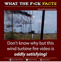 Facts, Memes, and Videos: WHAT THE FCK FACTS  Video Credit: e Technology/Youtube  Don't know why but this  wind turbine fire video is  oddly satisfying!  FB.com/WhatThe Facts  WhatTheFFacts  adiplywtffacts