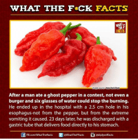 ghost peppers: WHAT THE FCK FACTS  WHAT  New York Post  Image Source  After a man ate a ghost pepper in a contest, not even a  burger and six glasses of water could stop the burning.  He ended up in the hospital with a 2.5 cm hole in his  esophagus-not from the pepper, but from the extreme  vomiting it caused. 23 days later, he was discharged with a  gastric tube that delivers food directly to his stomach  FB.com/WhatThe Facts  @WhatTheFFacts  adiplywtffacts
