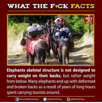 deforming: WHAT THE FCK FACTS  WHAT  www.travelerfolio com  Elephants skeletal structure is not designed to  carry weight on their backs, but rather weight  from below. Many elephants end up with deformed  and broken backs as a result of years of long hours  spent carrying tourists around  @WhatTheFFact  FB.com/What'TheFacts  @WhatTheF Facts