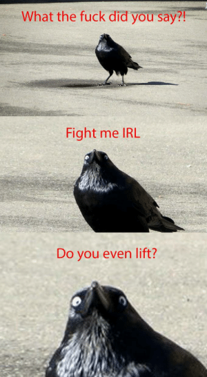 Internet Tough Guy | Know Your Meme: What the fuck did you say?  Fight me IRL  Do you even lift? Internet Tough Guy | Know Your Meme
