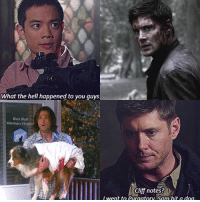Friends, Memes, and Girl: What the hell happened to you guys  River Bluff  Veterinary Hospital  Clif notes?  i went to purgatory Sann hit a dog Dean became friends with a vampire, Sam met a girl.. KevinTran DeanWinchester SamWinchester Supernatural