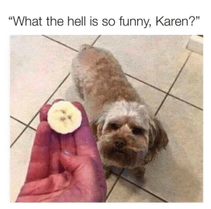 "Dognana: ""What the hell is so funny, Karen?"" Dognana"